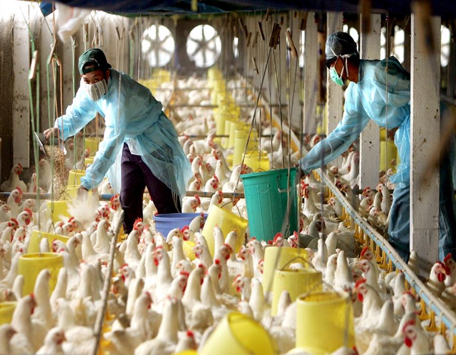 कोरोना के बीच देश पर मंडराया 'एच5एन8 वायरस' का खतरा, राजस्थान, केरल सहित इन राज्यों में हालात बुरे