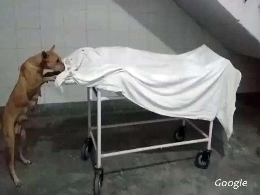 डॉक्टरों की बड़ी लापरवाही: अस्पताल में लड़की के शव को नोचते दिखा कुत्ता, देखें VIDEO